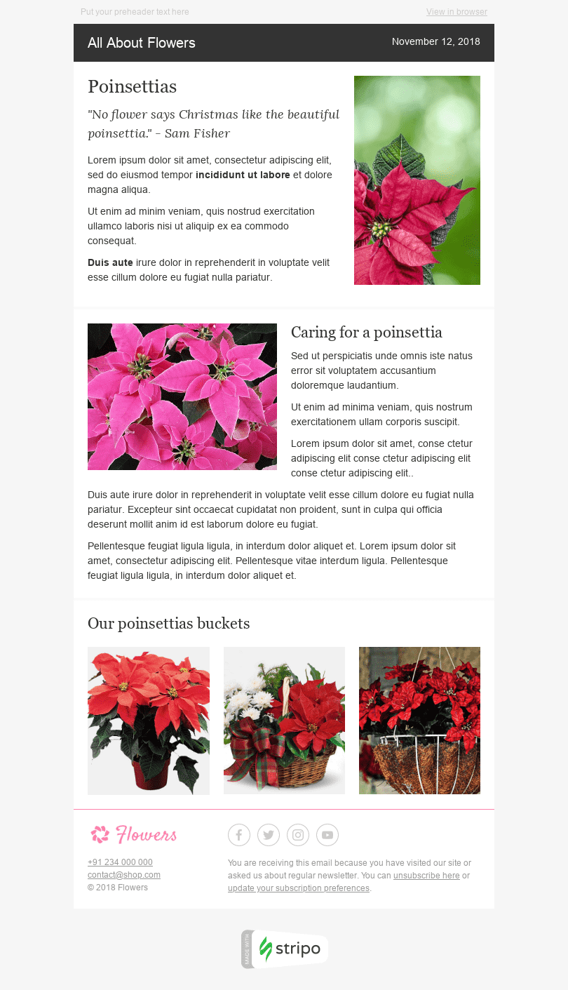 Stripo Gifts Flowers Trigger newsletter Email Digest Pretty Plants email web