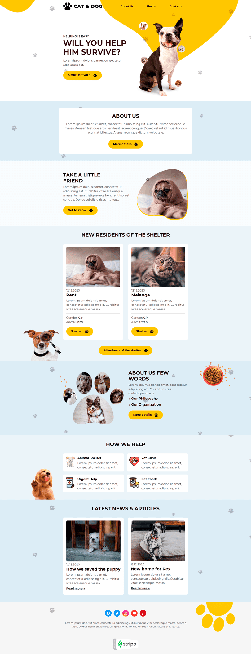 Promo Email Template «Cats and Dogs» for Non-Profit & Charity industry desktop view